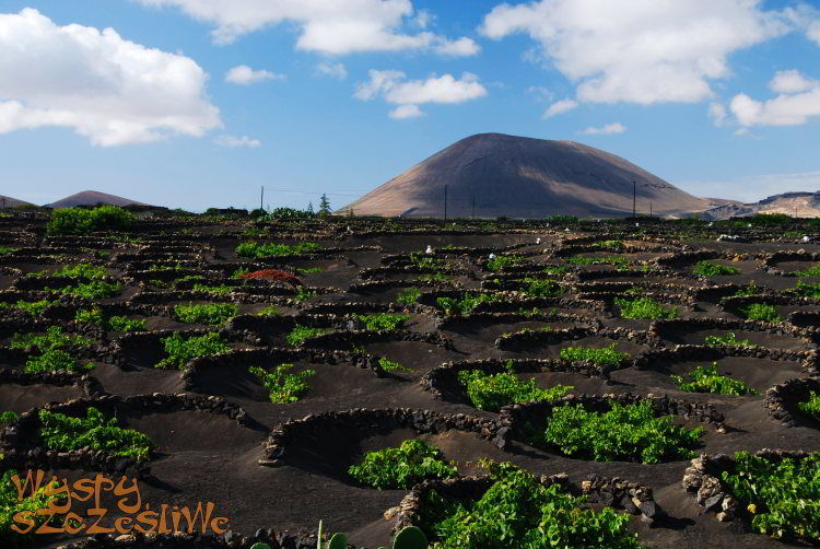wulkaniczne winnice na Lanzarote