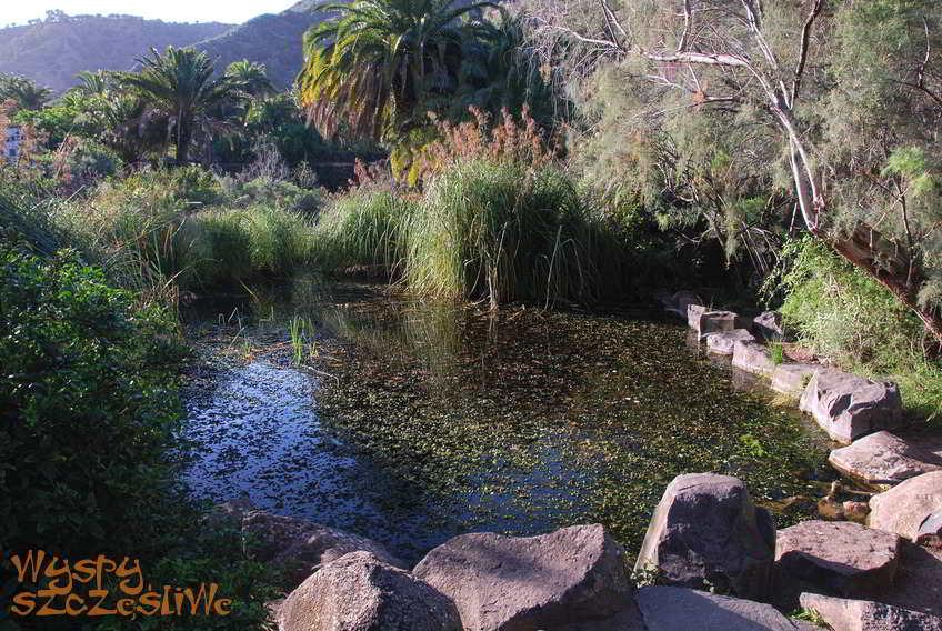 Wyspy kanaryjskie gran canaria jard n canario for Jardin canario restaurante