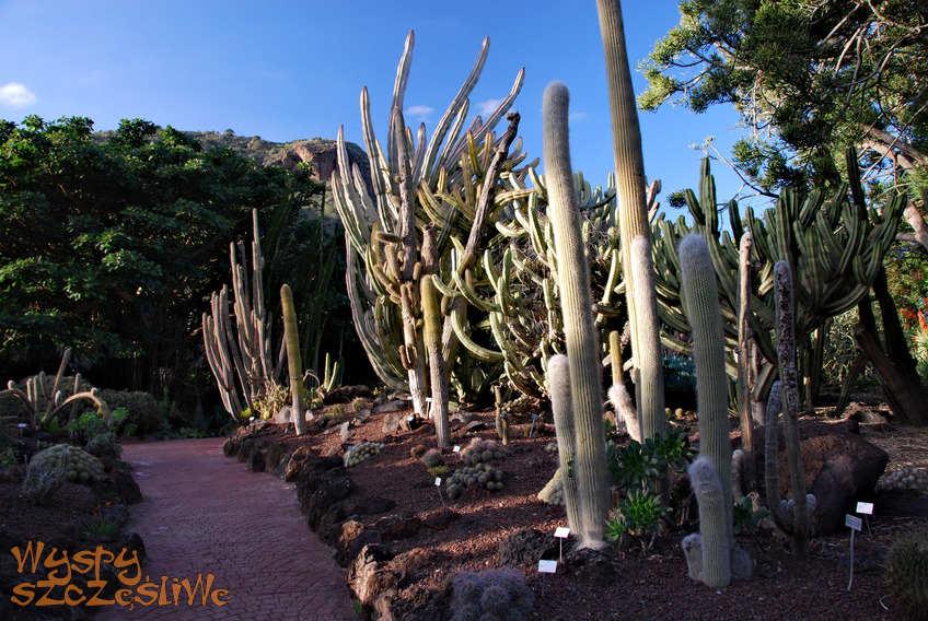 Wyspy kanaryjskie gran canaria jard n canario for Restaurante jardin canario