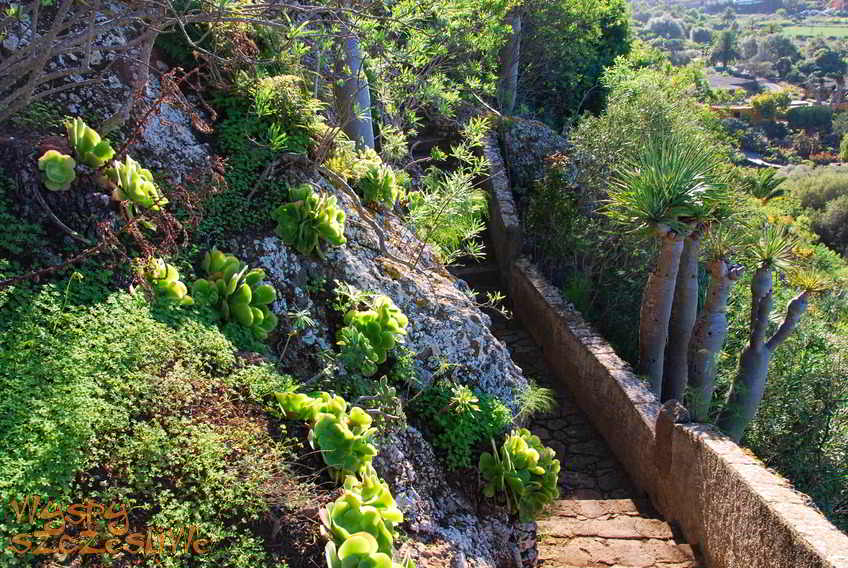 Wyspy kanaryjskie gran canaria jard n canario for Jardin canario