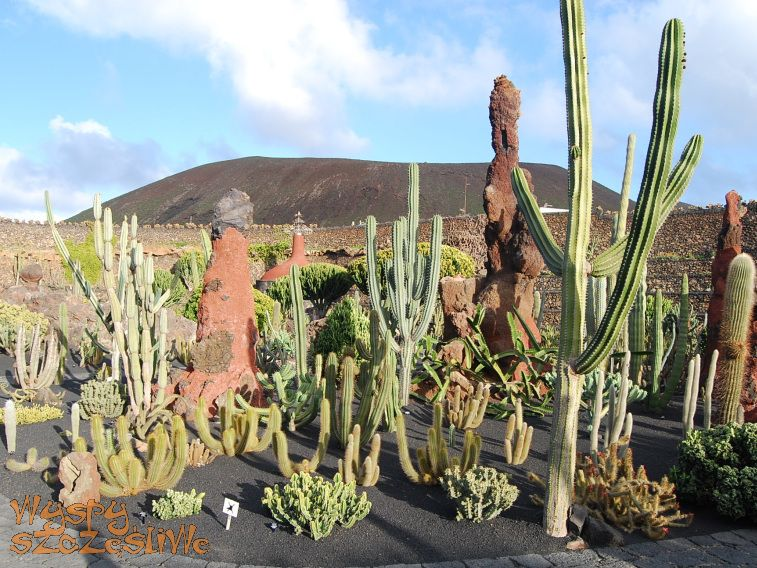 Wyspy kanaryjskie lanzarote ogr d kaktus w jard n de for Jardin de cactus lanzarote